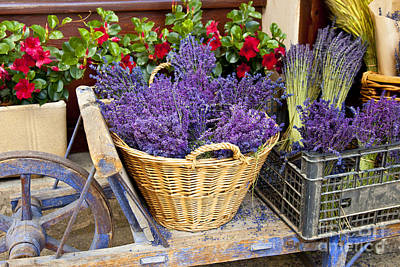 Photograph - Provence Lavender by Brian Jannsen