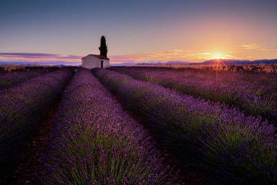 France Provence Photograph - Provence Lavender by Donald Luo