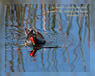Photograph - Proverbs 27 19 by Dawn Currie