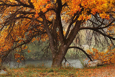 Photograph - Provo Autumn #1 by TL  Mair
