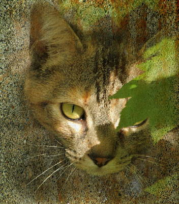Photograph - Prowling Cat by Angie Vogel