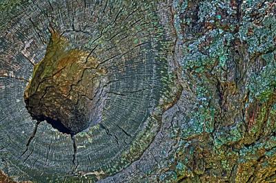 Photograph - Pruned Limb On Live Oak Tree by Jerry Gammon