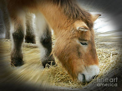 Barnyard Digital Art - Przewalski's Horse by Emmy Marie Vickers