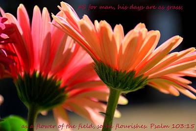 Photograph - Psalm 103 15 Gerber Daisies by Lisa Wooten