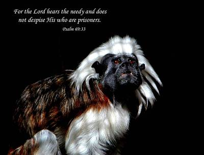Photograph - Psalm 69 Verse 33 by Deena Stoddard