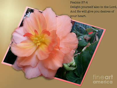 Photograph - Psalms 37  4 by Donna Brown