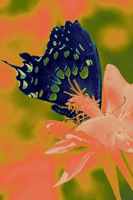 Psychadelic Butterflys Original