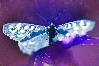 Photograph - Psychedelic Butterfly by David Davies