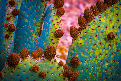 Mohave Az Photograph - Psychedelic Cactus by Glenn DiPaola