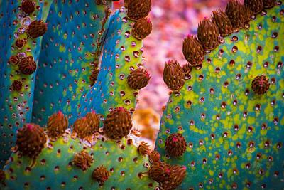 Psychedelic Cactus Art Print