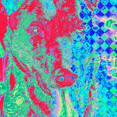 Royalty-Free and Rights-Managed Images - Psychedelic Dog by Cassie Peters