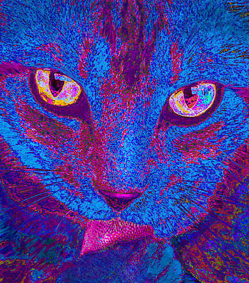 Photograph - Psychedelic Kitty by Jane Schnetlage