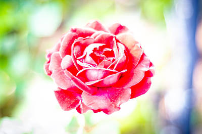 Photograph - Psychedelic Rose by David Morefield