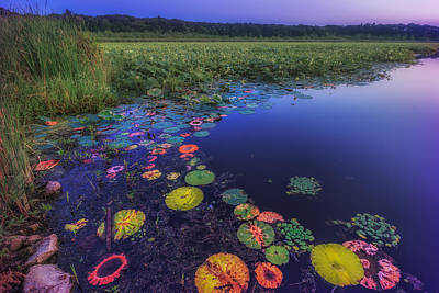 Concord Massachusetts Photograph - Psychedelic Shore - Great Meadows Nwr by Sylvia J Zarco