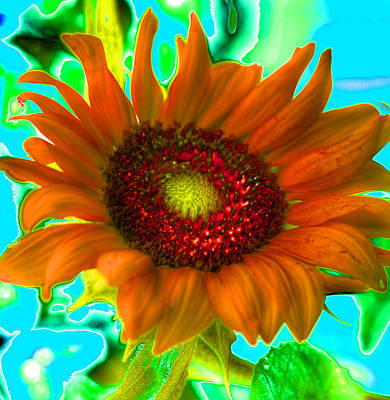 Photograph - Psychedelic Sunflower by Richard Ortolano