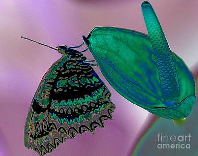 Photograph - Psychodelic Butterfly by Elizabeth Winter