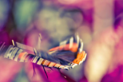 Photograph - Psychodelic Butterfly by Trish Tritz