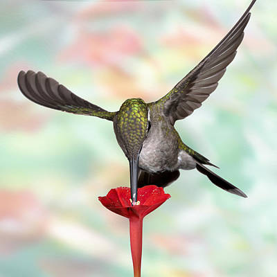 Photograph - Psychodelic Hummingbird 1 by Gregory Scott