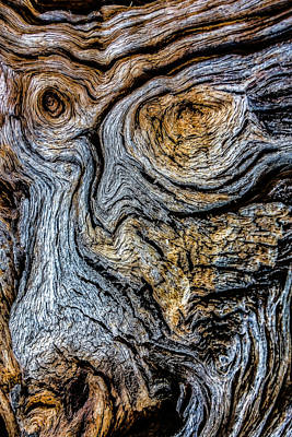 Photograph - Psychedelic Wood by Beverly Parks