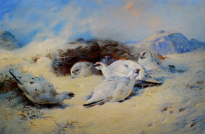 Celestial Painting - Ptarmigan Seeking Shelter by Celestial Images