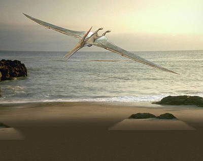 Paleozoology Photograph - Pteranodon Pterosaur by Friedrich Saurer