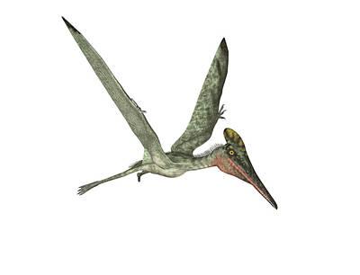 Pterodactyl Pterosaur Art Print by Friedrich Saurer