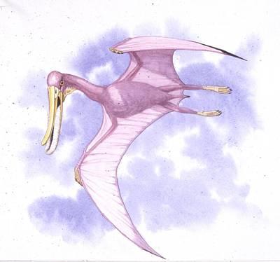 Flying Dinosaur Photograph - Pterodaustro Pterosaur by Deagostini/uig