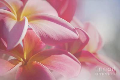 Photograph - Pua Melia Ke Aloha Keanae Dreams by Sharon Mau