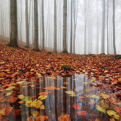 Czech Republic Photograph - Puddle by Martin Rak