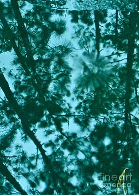 Photograph - Puddle Of Pines by Joy Hardee