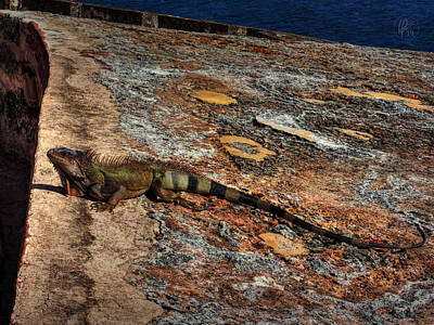 Photograph - Puerto Rico Iguana 003 by Lance Vaughn