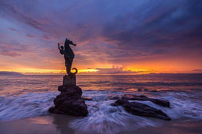 Photograph - Puerto Vallarta Seahorse by Shanti Gilbert