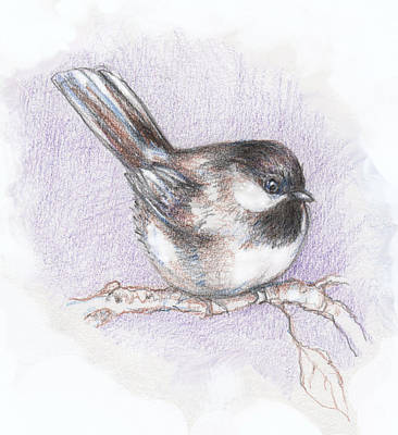 Colored Pencil Mixed Media - Puffed Up Chickadee by Peggy Wilson
