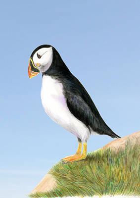 Painting - Puffin Bird by Alison Langridge