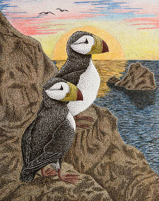Puffin Drawing - Puffin On Sunset Cliff by Jeanette K