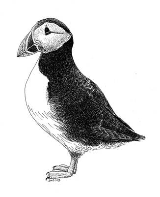 Puffin Drawing - Puffin by Scott Woyak