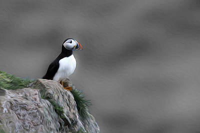 Photograph - Puffin by Veli Bariskan