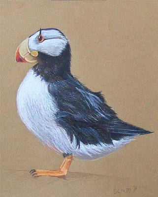 Puffin Drawing - Puffin With Red And Yellow Beak  by Liam Harper