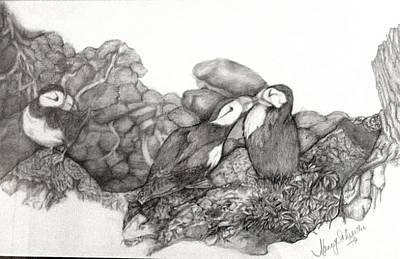 Puffin Drawing - Puffins by Nancy Cooper