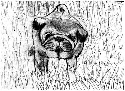 Bestfriend Drawing - Pug In The Grass by Shaunna Juuti