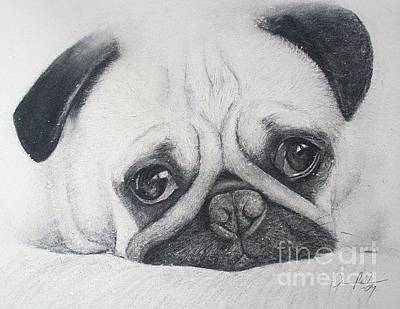 Drawing - Pug Me by Adrian Pickett