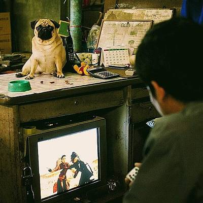 Sciencefiction Photograph - Pug On The Table, Sci-fi On The Tv by David  Hagerman