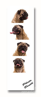 Pug Photo Booth Art Print by Edward Fielding