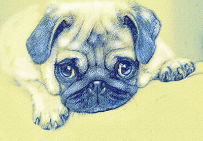 Cute Dogs Digital Art - Pug Puppy Pastel Sketch by Jane Schnetlage