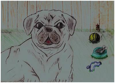 Fence Drawing - Pug Yard by Shaunna Juuti