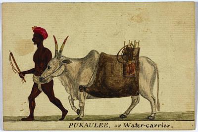 Pukaulee Print by British Library