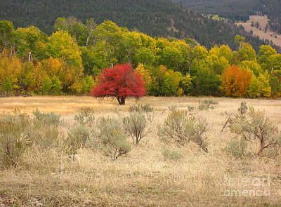 Photograph - Canadian Autumn by Kathy Bassett