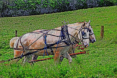 Pulling Their Weight Art Print by Brian Graybill
