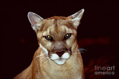 Prowler Digital Art - Puma by Gary Gingrich Galleries