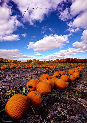 Pumpkin Patch Photograph - Pumkin Daze by Phil Koch